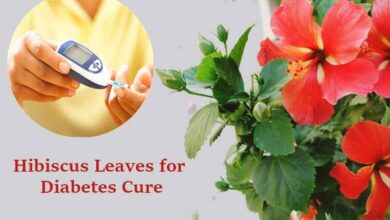 Hibiscus Leaves for Diabetes