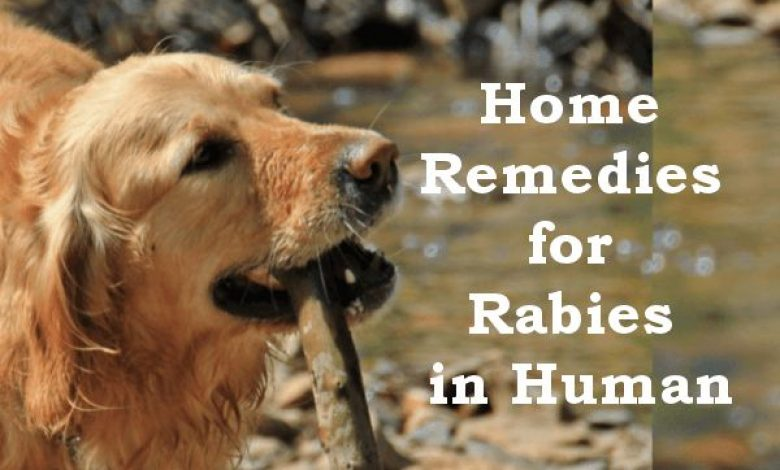 Home Remedies for Rabies in Human