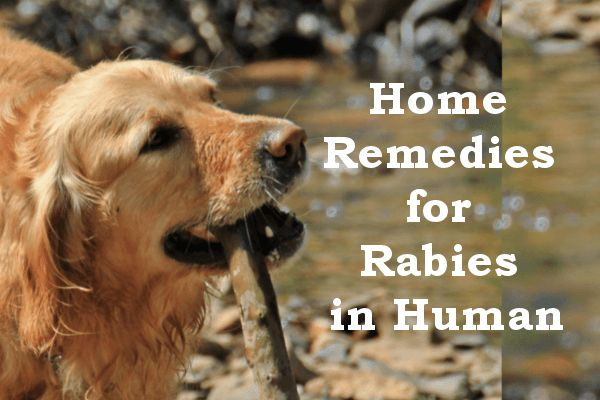 Photo of Home Remedies for Rabies Symptoms in Human (Dog bites)