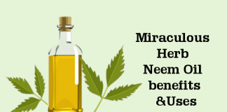 Miraculous Herb Neem Oil Benefits and Uses You Must Know