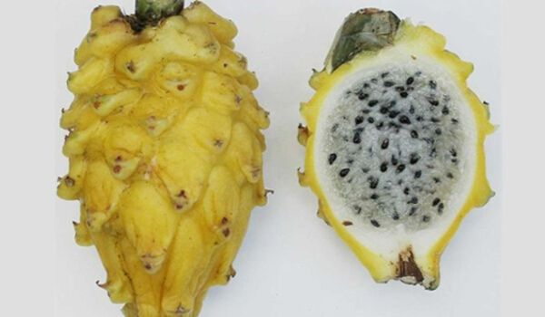 Hidden Benefits Of Dragon Fruit That Will Definitely Surprise You