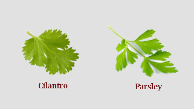 Difference Between Cilantro and Parsley