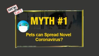 Photo of 10 Common Myths and Facts about the Deadly Coronavirus (2020)