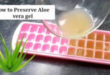 How to Preserve Aloe vera gel