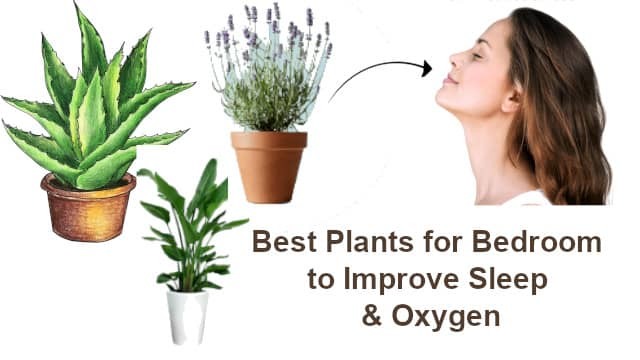 Best Plants for Bedroom with Low Light